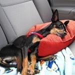 Fargo takes a nap!