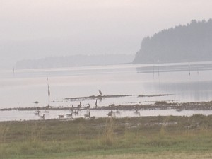 Waterfowl ecosystem
