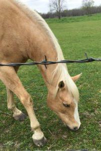 Beige horse
